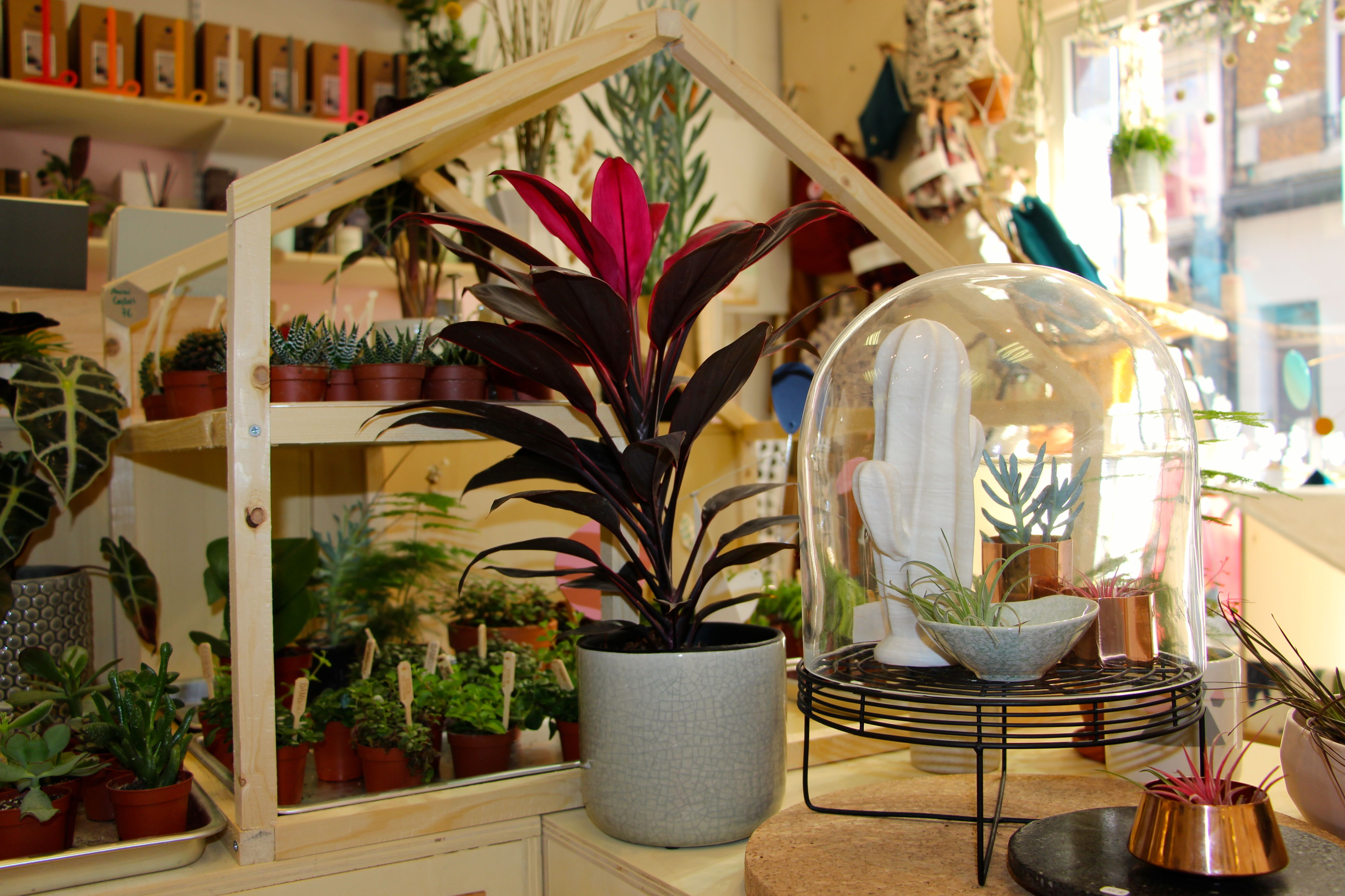 Magasin Deco Lille : plantes atelier kumo design shop magasin objet deco lille chicon choc blog lille chicon choc ~ Nature-et-papiers.com Idées de Décoration